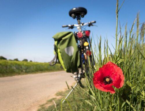 Fahrradträger (AHK)